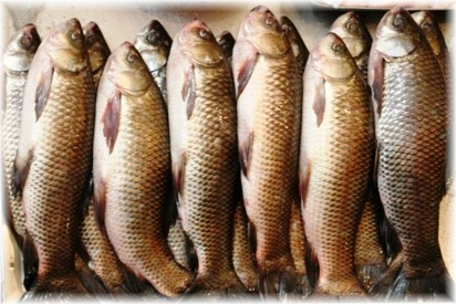 little-india-singapore-fish