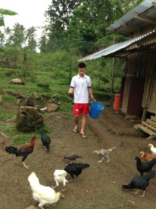 A student feeds the community chickens